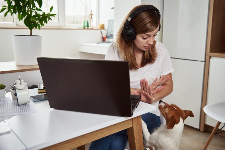 Laptop do domu i na studia
